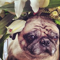 Full_lax_cocoxochitl_sixarms_pugandflowers