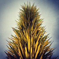 Full_lax_cocoxochitl_chihuly_yellowcactus