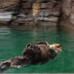 Infobox_sfo_amywhiggins_aquarium_otter